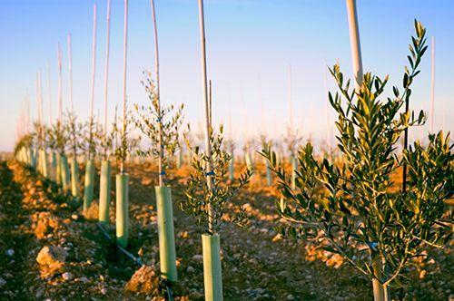 Plantación Finca Valdezarza.